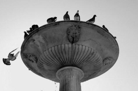 Palomas. Foto de Claudia González