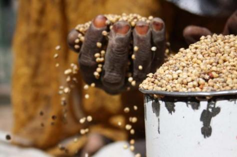 75 % de los pobres del mundo depende de la agricultura. Inseguridad alimentaria.