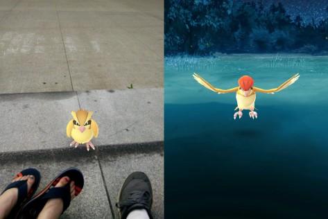 Pokemon14