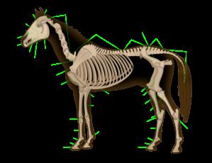 horse_anatomy-es-svg