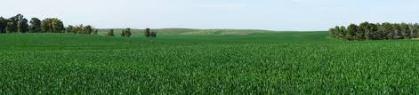 prado-verde